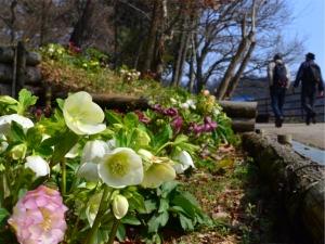 【国営讃岐まんのう公園】早春フェスタ&バレンタインイルミネーション