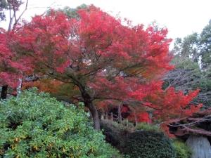 金刀比羅宮の紅葉