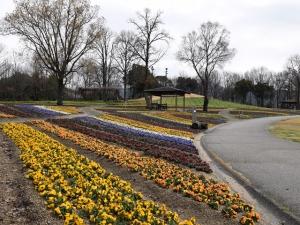 まんのう公園で春の便り
