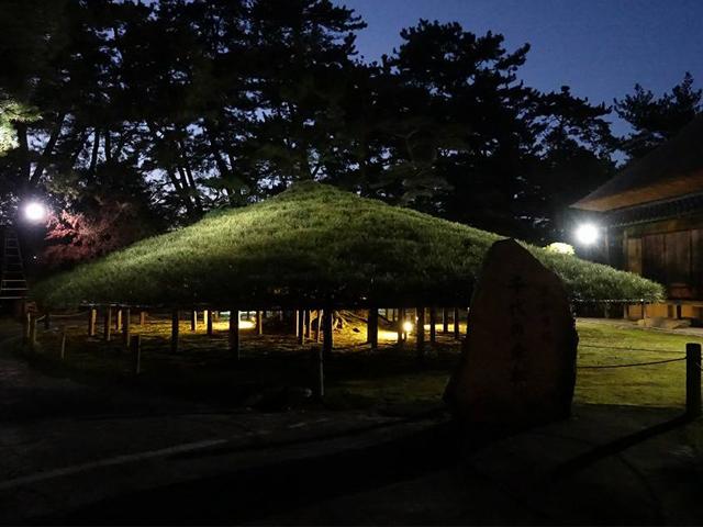【中津万象園】大傘松ライトアップのご案内