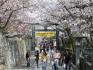 「金刀比羅宮」は桜の名所